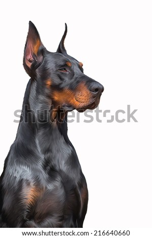 Drawing Doberman dog, on a white background - stock photo