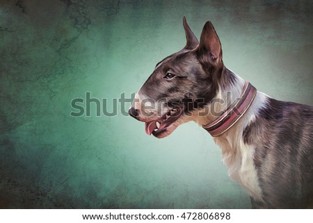 essays controversal breed dog pit bull Download thesis statement on pit bulls in our database or order an original thesis essay database not a no breed of dog has been more talked about.