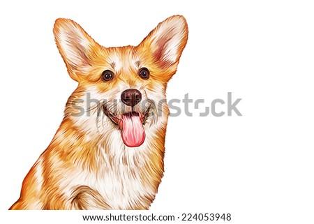Drawing Dog breed Welsh Corgi, Puppy - stock photo