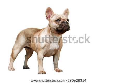 Drawing  dog French Bulldog, portrait on a white background