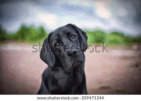 Drawing dogs labrador, black - stock photo