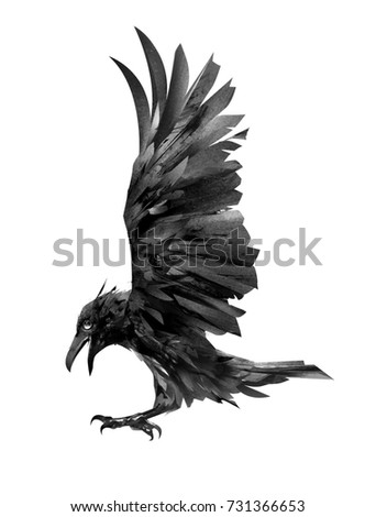 drawing flying crow isolated sketch of a bird
