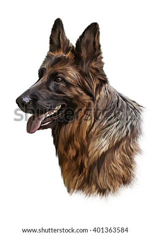 Drawing German Shepherd Dog, portrait oil painting on a white background