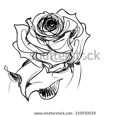 Drawing  graphics with floral pattern for design. Floral flower natural design. Graphic, sketch drawing. rose - stock photo