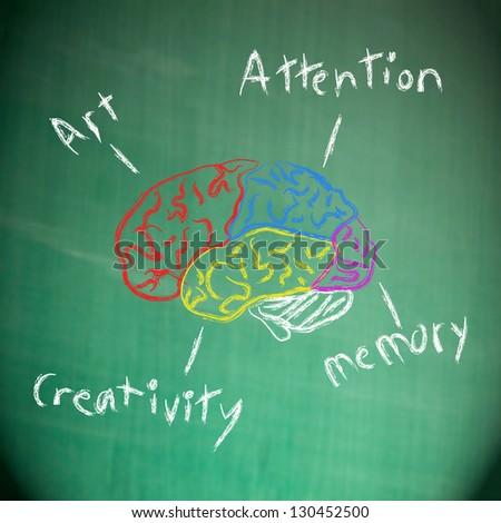Drawing human brain - stock photo