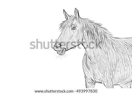Drawing, illustration  Horse sketch portrait on a white background