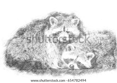 Drawing of a couple of raccoons looking into the camera