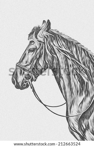 Drawing of a horse black and white - stock photo