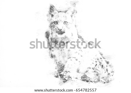 Drawing of a little bobcat sitting