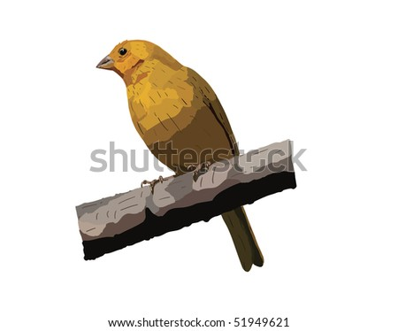 Drawing of a Saffron Finch found in the mountains of Ecuador. Vector image also available. - stock photo