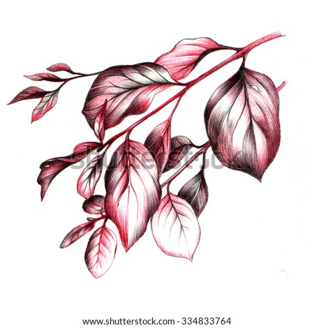 Drawing of leaves  - stock photo