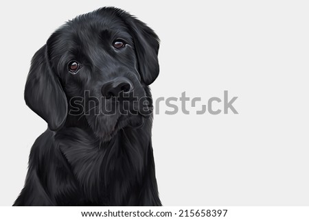 Drawing of the dog, a black Labrador, portrait
