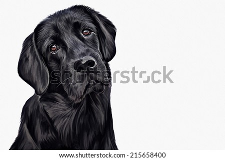 Drawing of the dog, a black Labrador, portrait, on a white background