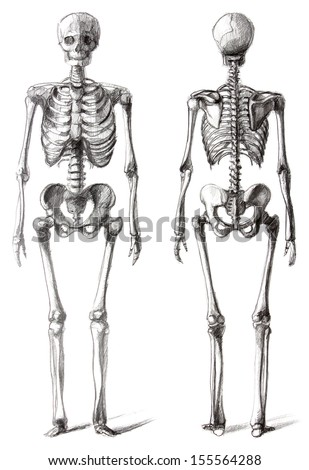 Drawing skeleton, isolated on white