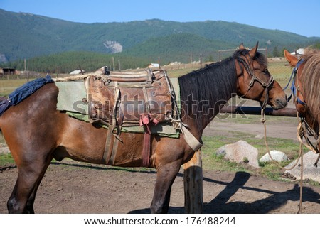 Drawn by horses before the expedition - stock photo