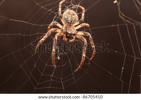 Dreadful Cross spider on his net in the darkness. - stock photo