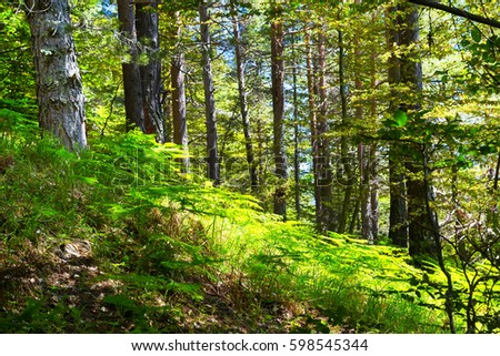 Dream green fairy tale forest with ferns, sun, trees