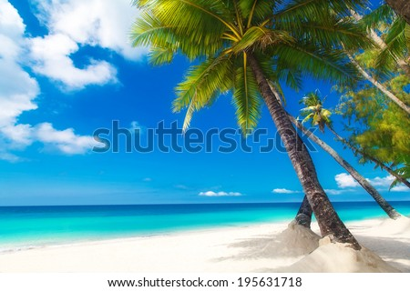 Dream scene. Beautiful palm tree over white sand beach. Summer nature view. - stock photo