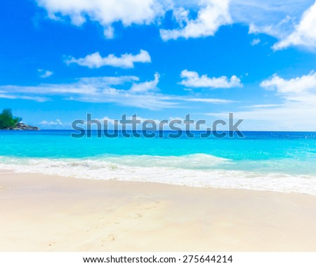 Dream Sea Palms  - stock photo