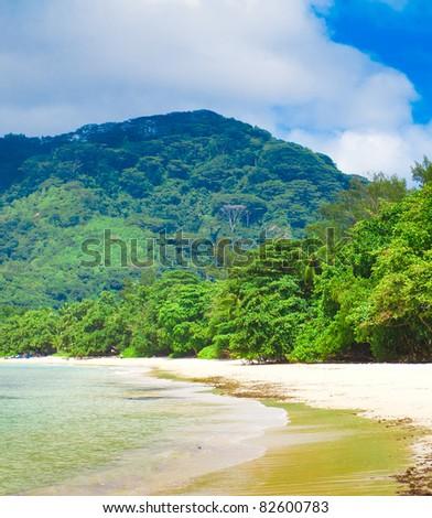 Dream Shore Palms - stock photo