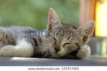 Dreaming kitten - stock photo