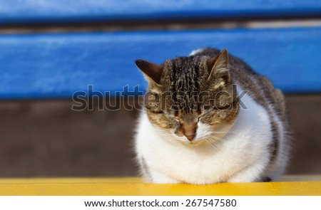 Dreaming lazy cat on the bench - stock photo