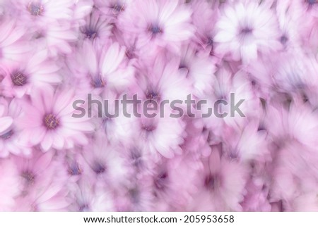 Dreamy background of pink daisy flowers, flowery field, natural abstract freshness, spring garden, slow motion photography effect, fine art - stock photo