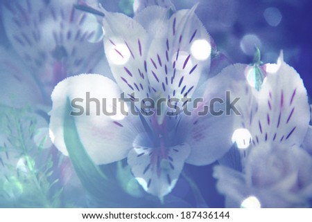 Dreamy background with the beautiful orchid flowers - stock photo