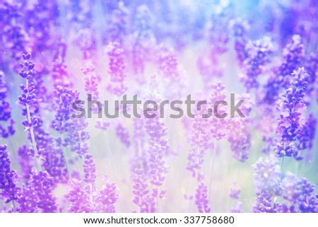 Dreamy beautiful lavender background with bokeh lights - stock photo