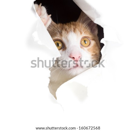 Dreamy cat looks through a hole in paper - stock photo
