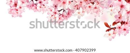 Dreamy Cherry Blossoms Natural Border Studio Stock Photo ...