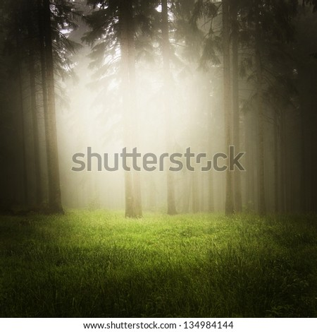 dreamy forest - stock photo