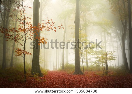 Dreamy forest during a misty autumn day - stock photo