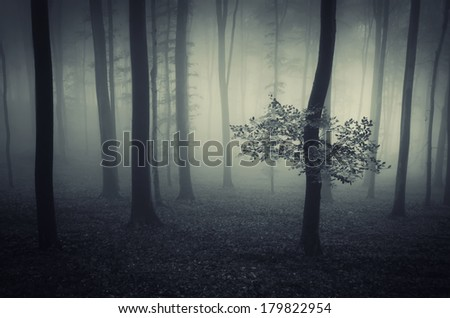 dreamy forest with fog and tree - stock photo