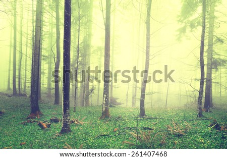 Dreamy green and bright yellow color foggy forest scene background. Color filter effect used. - stock photo