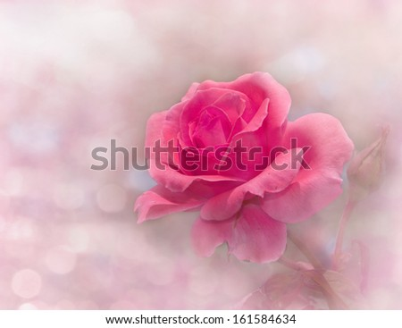 Dreamy image of a glowing pink rose in garden - stock photo