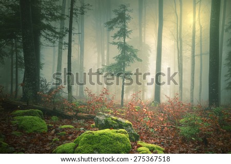 Dreamy light in foggy forest with lovely sun in background. Color filter effect used. Beautiful fantasy woodland was taken in south-east Slovenia. - stock photo