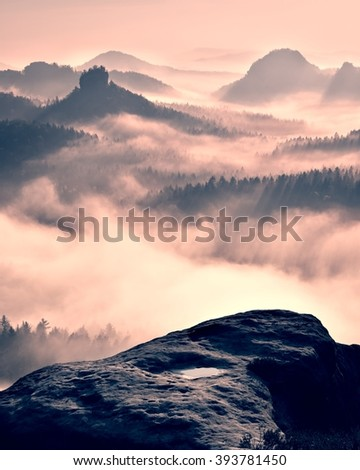 Dreamy misty forest  landscape. Majestic peaks of old trees  cut lighting mist. Deep valley is full of colorful fog and rocky hills are sticking up to Sun. - stock photo