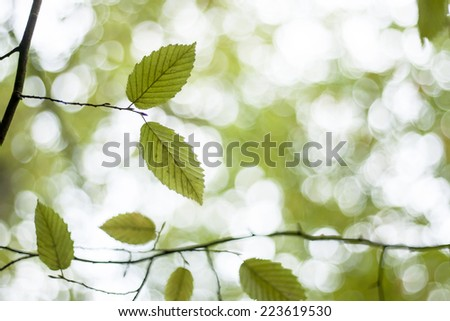 dreamy nature background with green beech tree leaves and white bokeh lights - stock photo