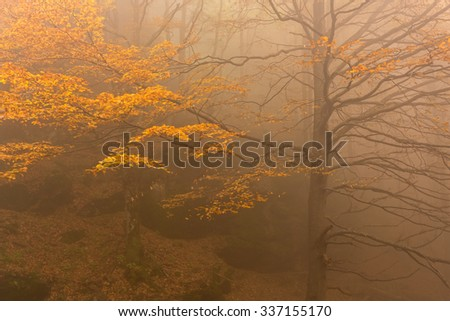 Dreamy orange  color foggy forest tree scene background.