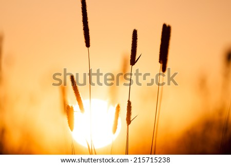 Dreamy summer grass background at sunset - stock photo