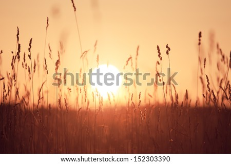 Dreamy summer grass background at sunset light