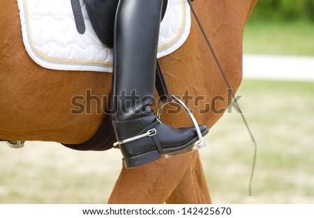Dressage horse and human leg - stock photo