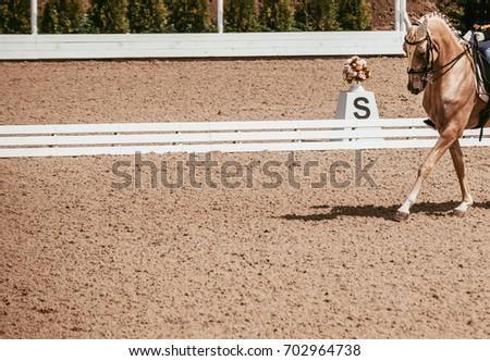 Horses for Sale   HorseClicks