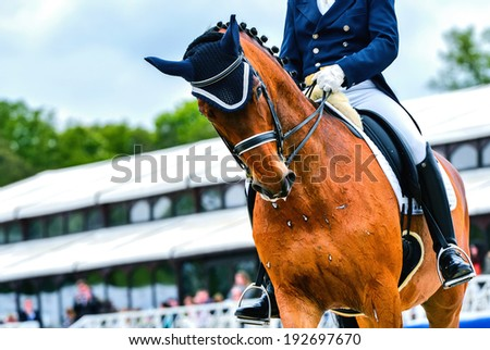 dressage horse and rider  on dressage competition - stock photo