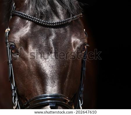 dressage horse eye in dark - stock photo