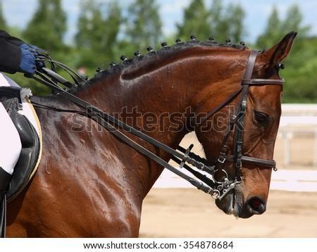 Dressage horse portrait in outdoor - stock photo