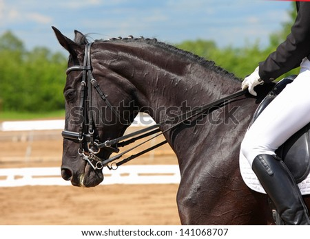 Dressage horse portrait in three day event