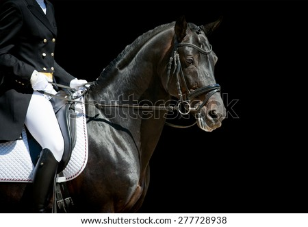 dressage horse portrait on black before the competition - stock photo