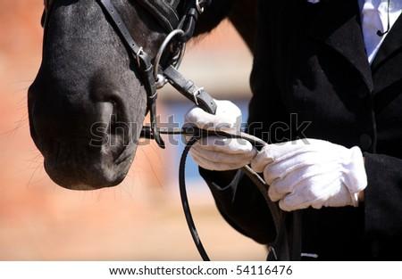 dressage horse, white gloves - stock photo